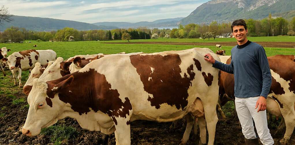 producteur de lait à reblochon