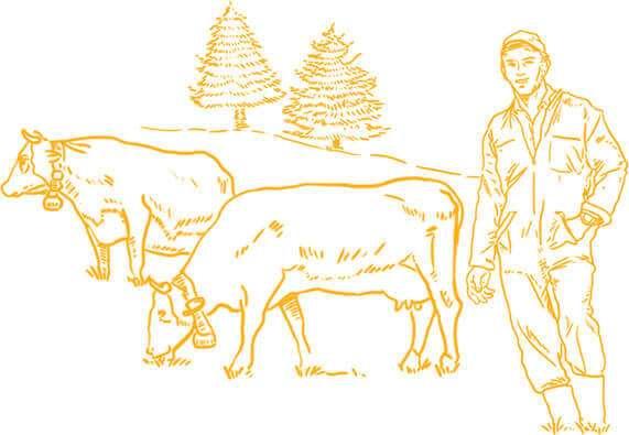 histoire du reblochon fermier