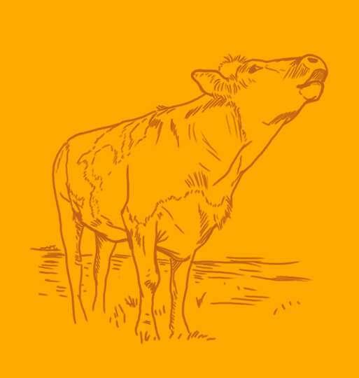 vache montbéliarde savoie